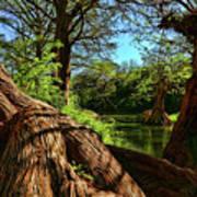Cypress Bend Park In New Braunfels Art Print