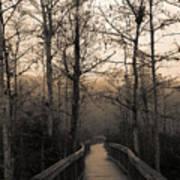 Cypress Boardwalk Art Print