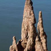 Cypress Knees Art Print