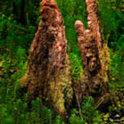 Cypress Knees Art Print