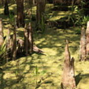 Cypress Knees In Green Swamp Art Print