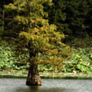 Cypress Matters Art Print