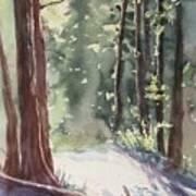 Cypress Mt. Art Print