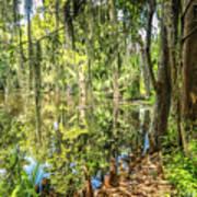 Cypress Pond Delight Art Print