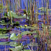 Cypress Pond Tranquility Art Print