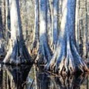 Cypress Reflection Art Print