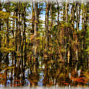 Cypress Strand Everglades Art Print