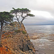 Cypress Tree At Pebble Beach Art Print