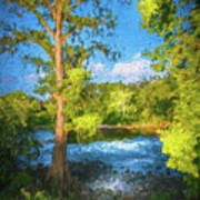 Cypress Tree By The River Art Print