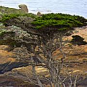 Cypress Tree In Point Lobos State Reserve Near Monterey-california  Art Print