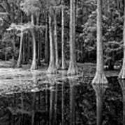 Cypresses In Tallahassee Black And White Art Print
