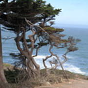 Cypress On The Cliff 15 Art Print