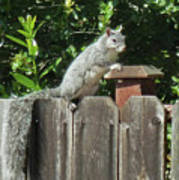 D-a0071-e-dc Gray Squirrel On Our Fence Art Print