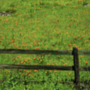 D7b6306 Fence And Poppies Art Print