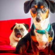Dachshund Dog, Pug Dog, Good Time On Bed Art Print