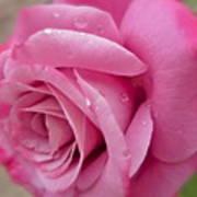 Daddy's Rose Art Print