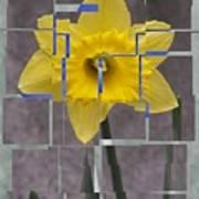 Daffodil 1 Art Print