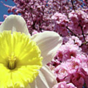Daffodil Flower Art Prints Pink Tree Blossoms Blue Sky Baslee Art Print