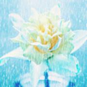 Daffodil Flower In Rain. Digital Art Art Print