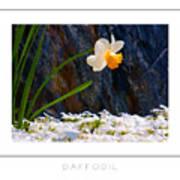 Daffodil Poster Art Print