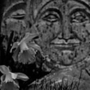 Daffodil Sun And Moon 2 Art Print