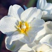 Daffodil Up Close Art Print