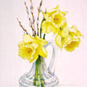 Daffodils And Pussy Willow Art Print