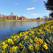 Daffodils Beside The Thames At Hampton Court London Uk Art Print