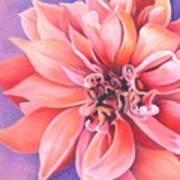 Dahlia 2 Art Print by Phyllis Howard