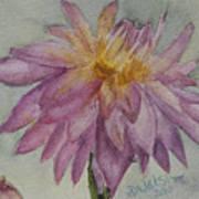 Dahlia At Eastport Me Art Print