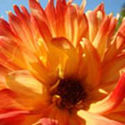 Dahlia Floral Orange Yellow Flower Botanical Art Prints Canvas Baslee Troutman Art Print