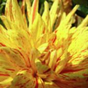 Dahlia Flower Art Collection Giclee Prints Baslee Troutman Art Print