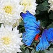 Dahlias And The Butterfly Art Print