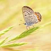 Dainty Butterfly  Art Print