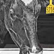 Dairy Cow Number 5216 Art Print