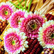 Daises On Indian Corn Art Print