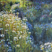 Daisies And Shades Of Blue Art Print by Steve Spencer