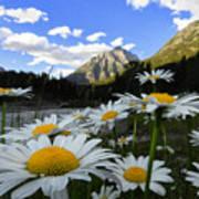 Daisies By Mcdonald Creek With Mt Cannon, Glacier Park Art Print