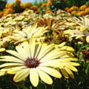 Daisies Yellow Daisy Flowers Garden Art Prints Baslee Troutman Art Print