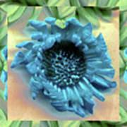 Daisy Blue Frame Art Print