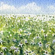 Daisy Field Art Print