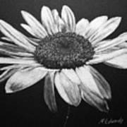 Daisy I Art Print by Marna Edwards Flavell
