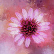 Daisy In Magenta Art Print