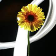 Daisy In White Art Print