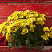 Daisy Plant In Drawers Art Print by Garry Gay