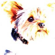Daisy The Yorkie Art Print