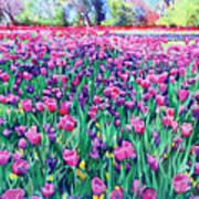 Dallas Tulips Art Print