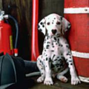 Dalmatian Puppy With Fireman's Helmet  Art Print by Garry Gay