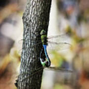 Dragonflies Need Love Too Art Print
