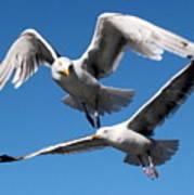 Aerial Dance Of The Seagulls Art Print